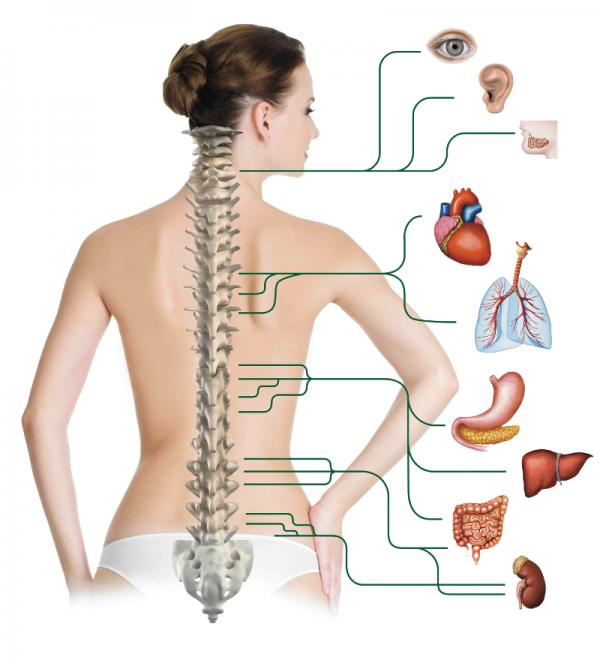 El cinturón del dolor en los músculos de la espalda