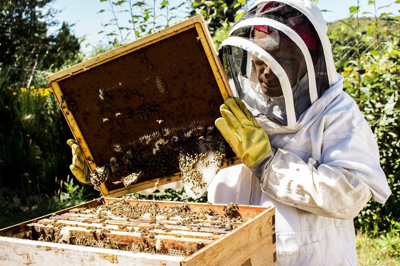 Resultado de imagen para apicultura